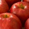 岩手 かどしげ農園のりんごの販売を開始しました!