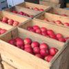 イーハトーヴのりんご園 かどしげ農園で収穫が始まりました!